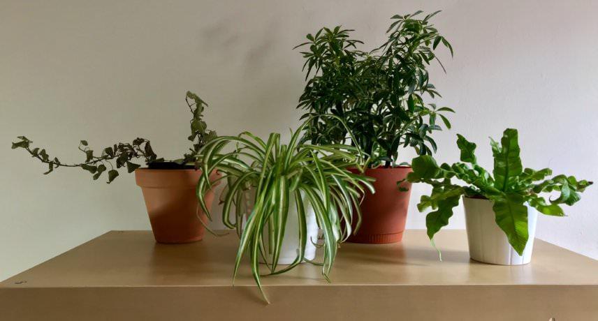 Soramimi's Plants
